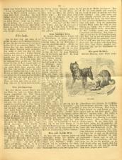 Gottscheer Bote 19070319 Seite: 13