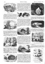 Illustrirte Zeitung 18580911 Seite: 12