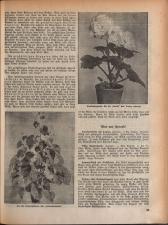 Wochenblatt der Bauernschaft für Salzburg 19381119 Seite: 23