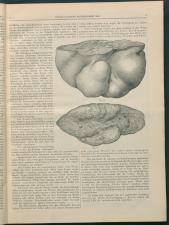Wiener Klinische Wochenschrift 18930105 Seite: 3