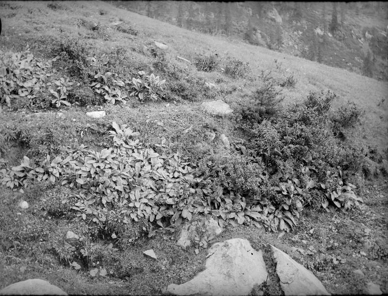 Watschinger Alm am Gartnerkofel (Karnische Alpen)