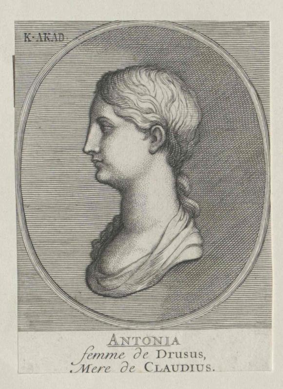 Antonia minor