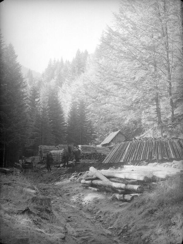 Kohlenmeiler im Übelbachtal