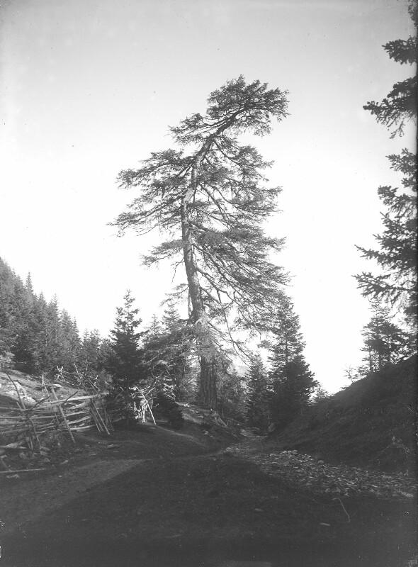 Grenzlärche beim Auerlingsee