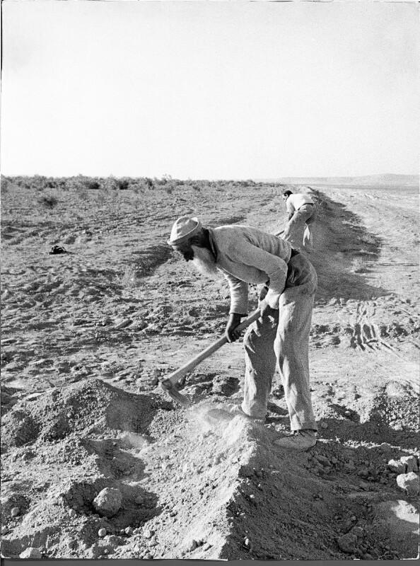 Palästinenser und Israeli bei der Feldarbeit