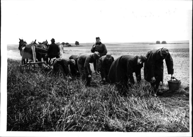 Polnische Gefangene bei der Feldarbeit