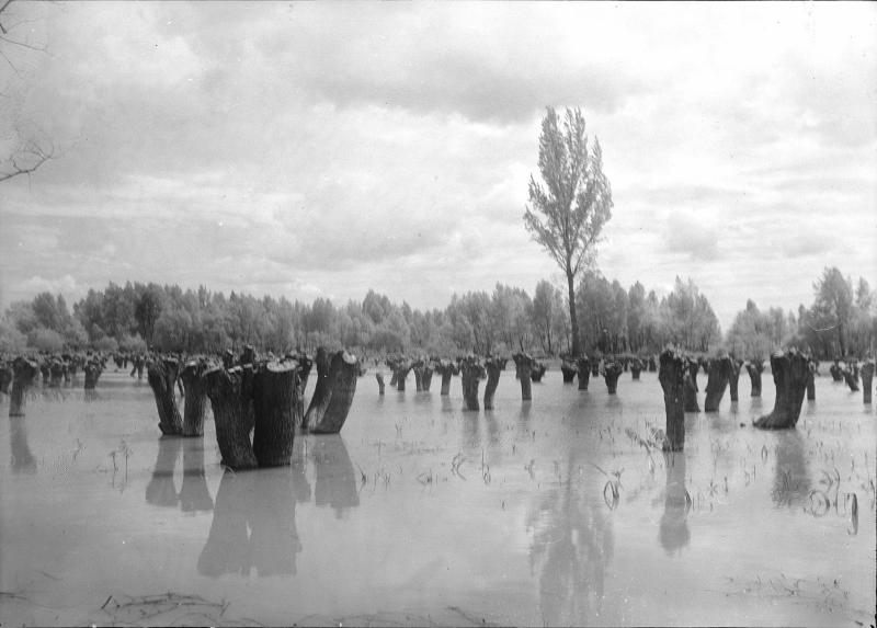 Überschwemmung im Marchfeld