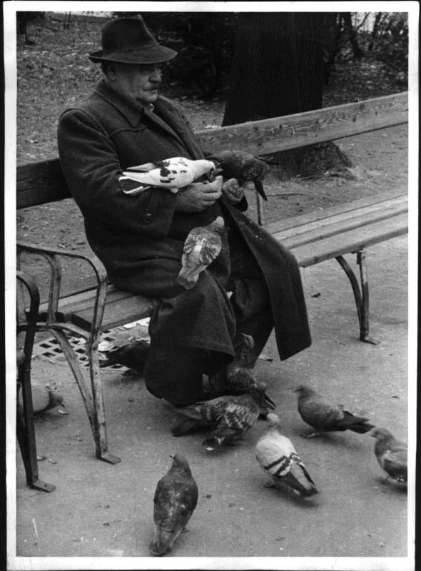 Taubenfütterer