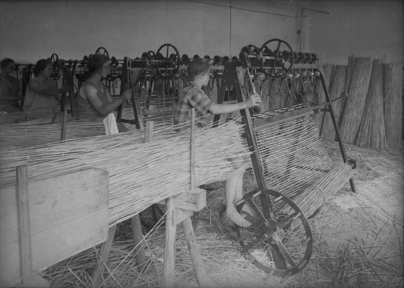 Schilfverarbeitung in Oggau