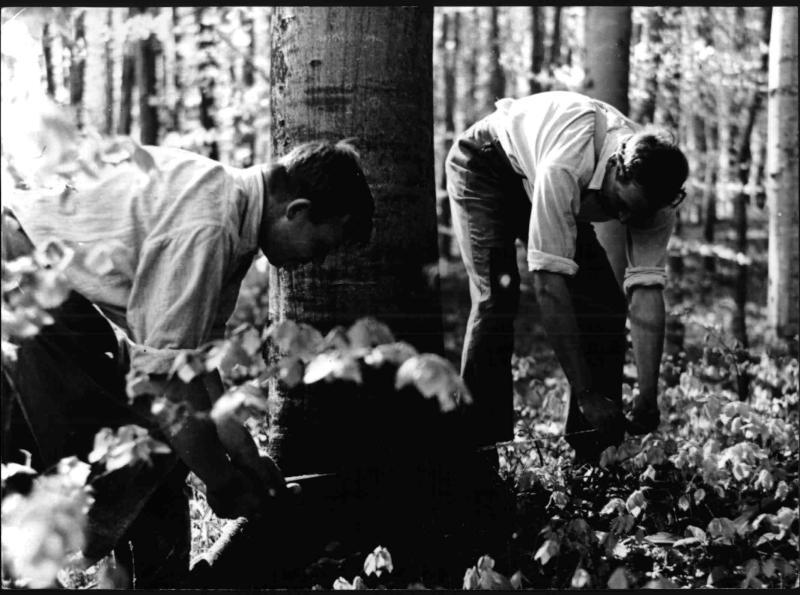 Ein Baum wird umgeschnitten