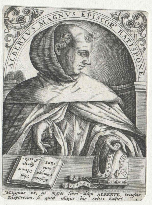 Albertus Magnus, Heiliger