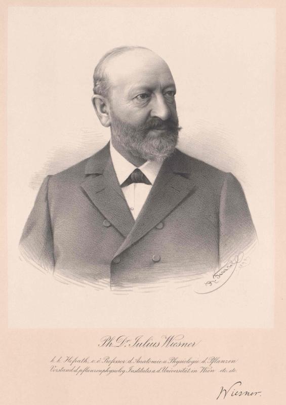 Wiesner, Julius Ritter von