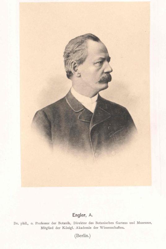Engler, Adolf