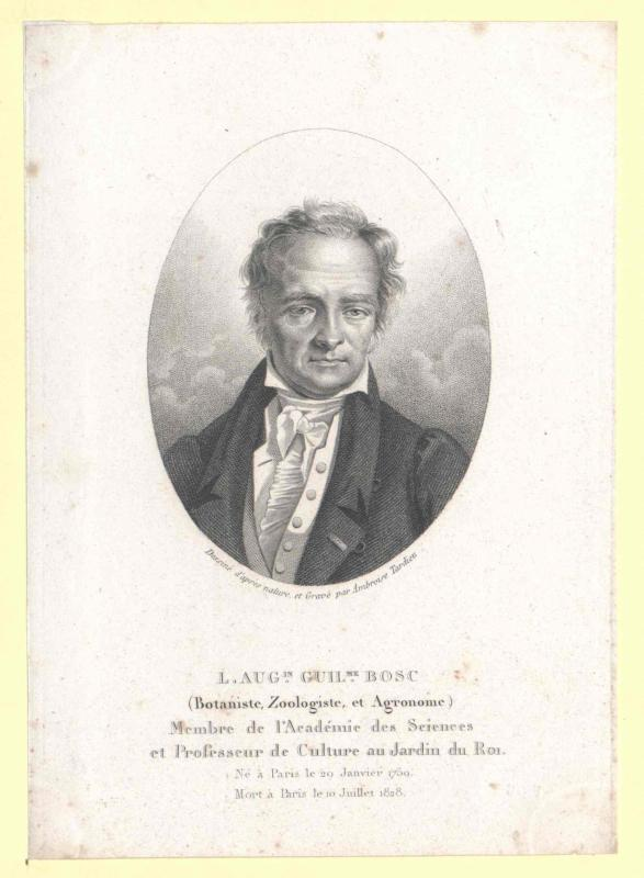 Bosc, Louis-Augustin-Guillaume