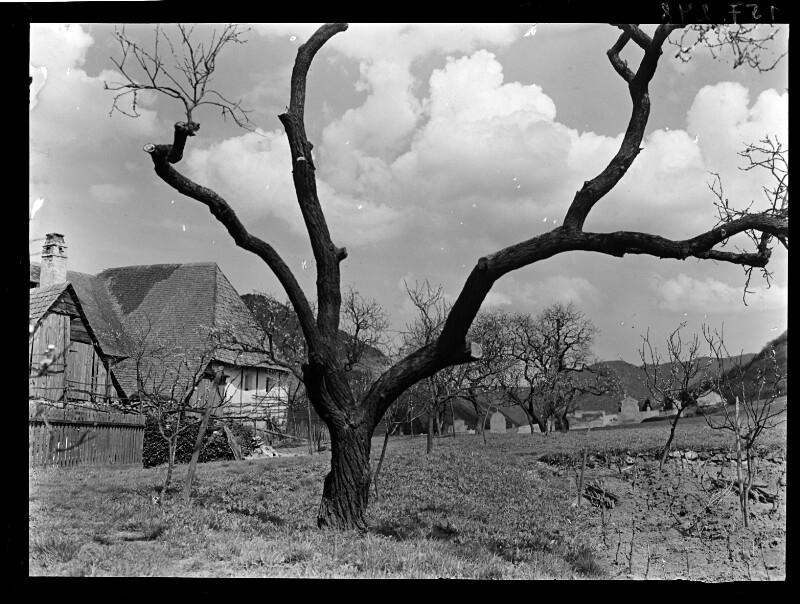 Alter Baum ohne Laub