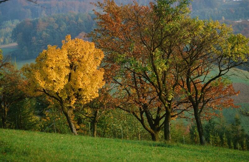 Bäume im Spätsommer