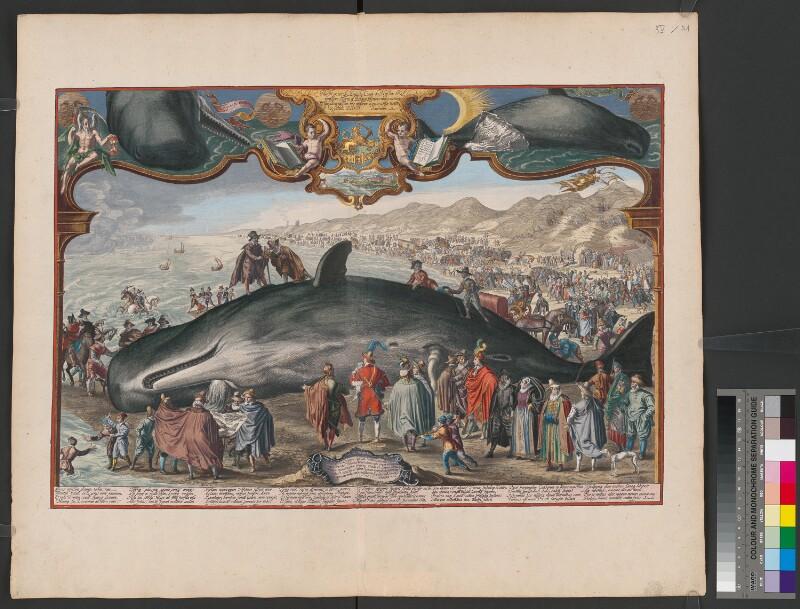 Gestrandeter Wal in Beverwijk am 20. Dezember 1601