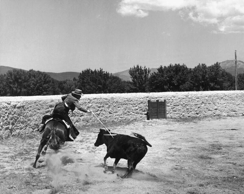 Der Herzog von Pinohermoso reitet mit seinem Bullen aus, Spanien, 1951