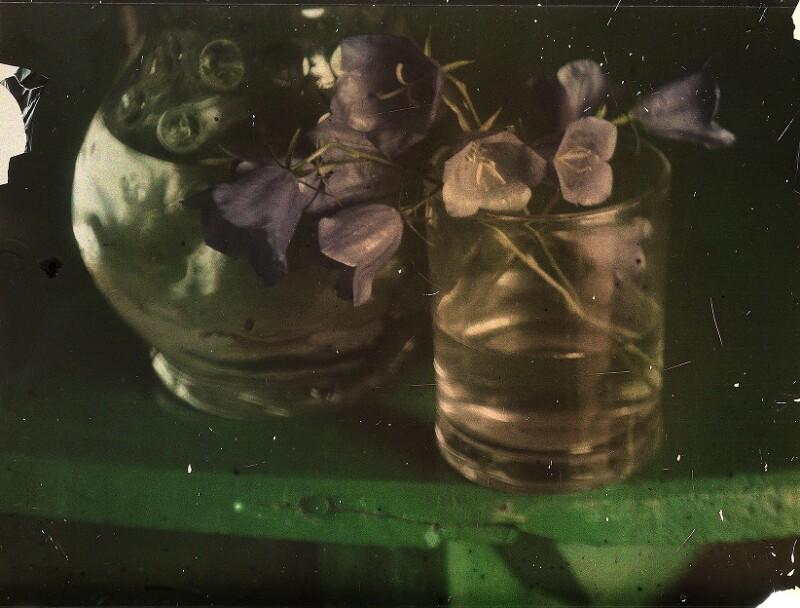Stillleben mit Gläsern und Glockenblumen