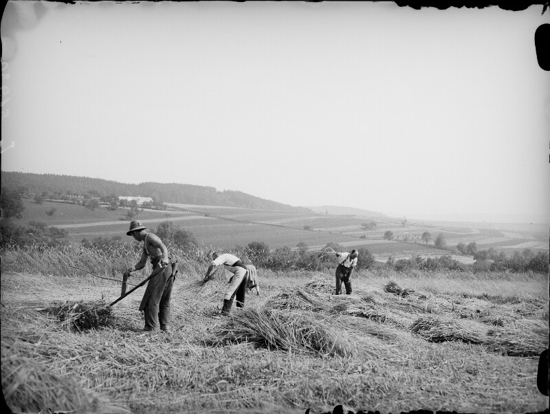 Getreideernte bei Persenbeug
