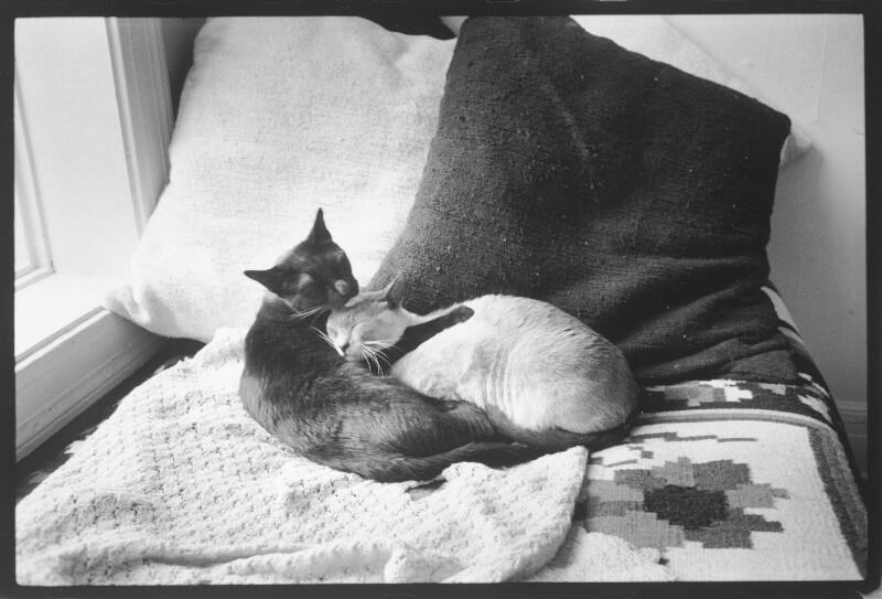 Zwei Katzen am Bett