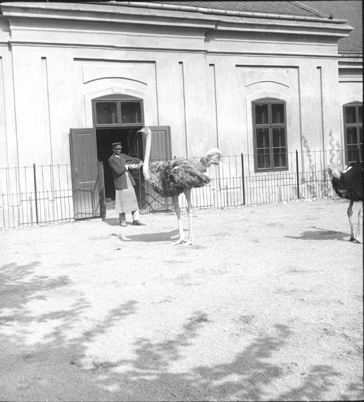 Wien 13, Tiergarten Schönbrunn