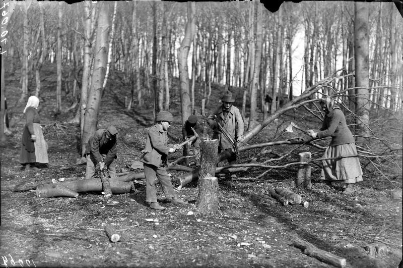 Holzsammler im Wienerwald