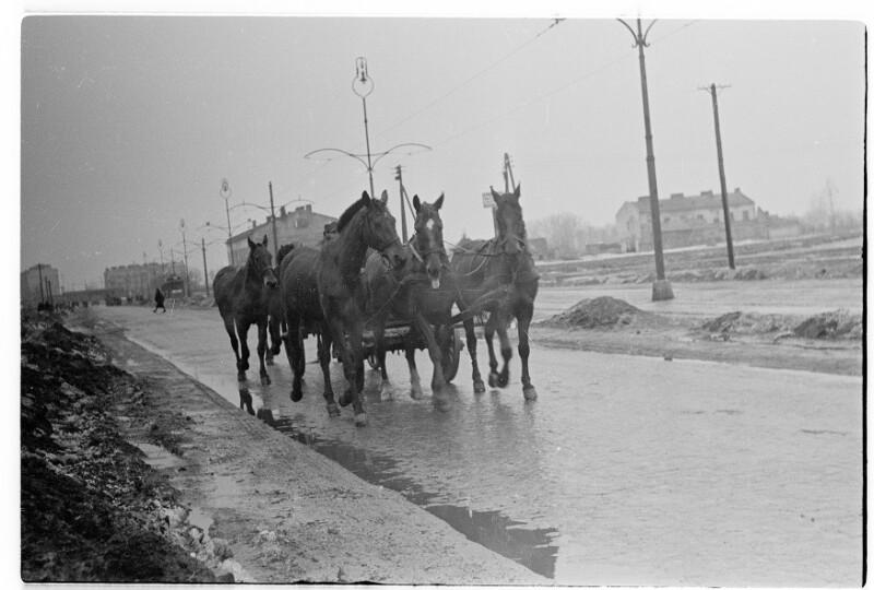 Pferde in Warschau