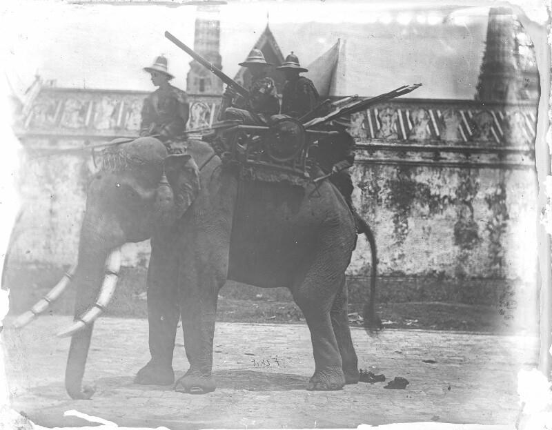 Kriegselefant des Königs von Siam