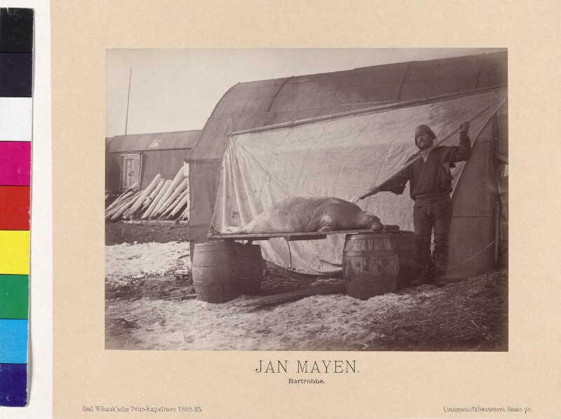Erlegte Bartrobbe auf der Insel Jan Mayen