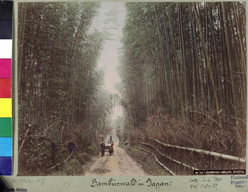 Bambuswald bei Kyoto