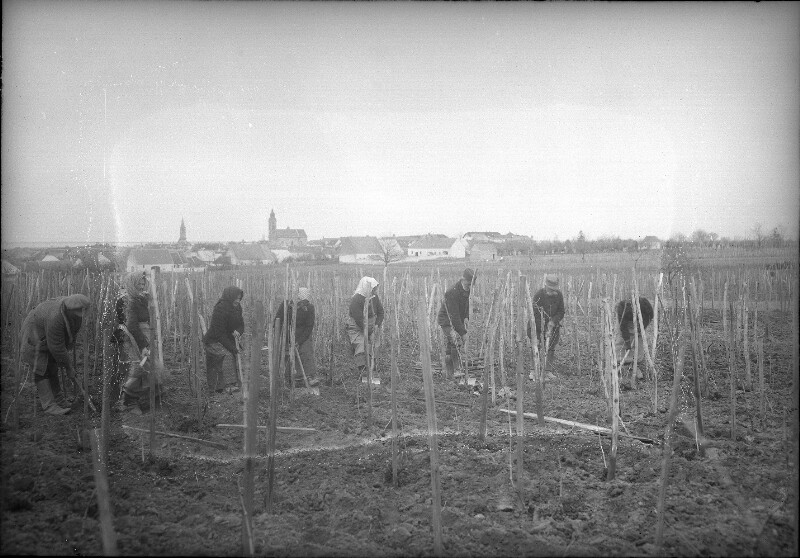 Arbeit im Weinbau