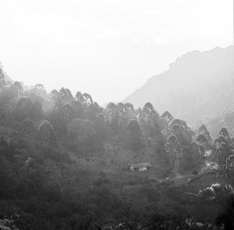 Berglandschaft im Nebel