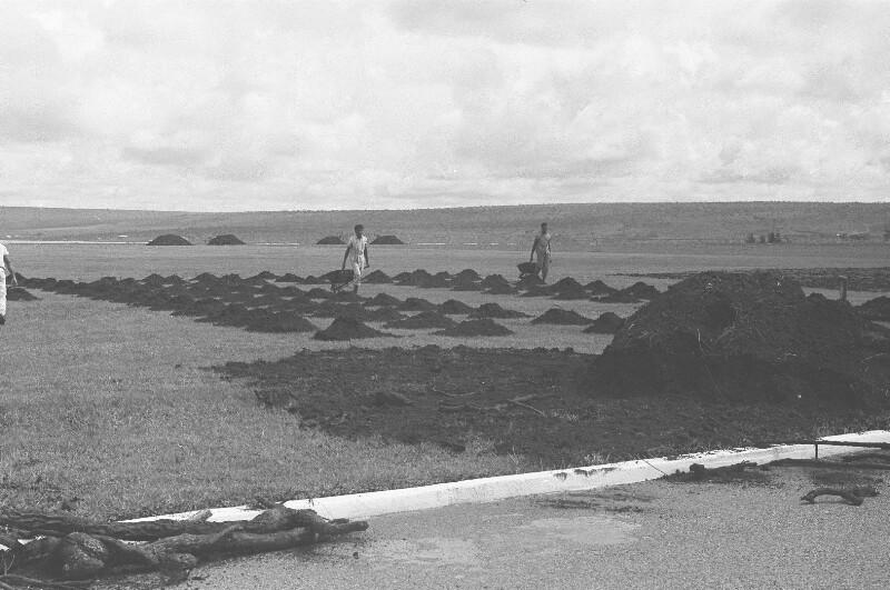 Bau von Parkanlagen in Brasília
