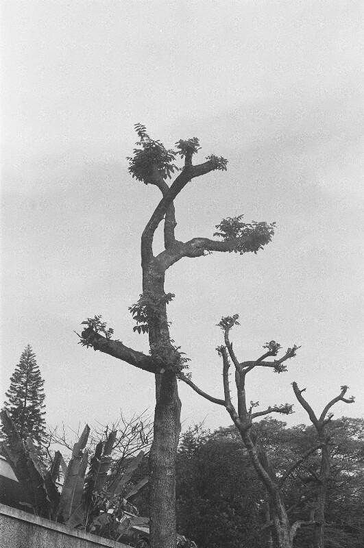 Baum-Studie