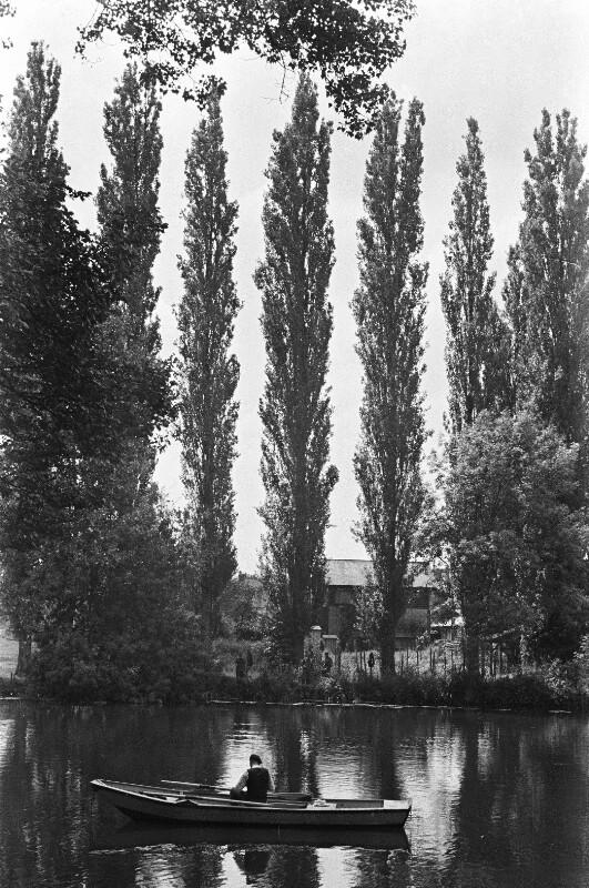 Flusslandschaft mit Pappeln