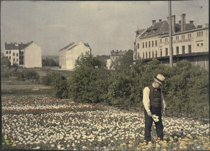 Tulpenfelder und Gewerbebetriebe in Döbling
