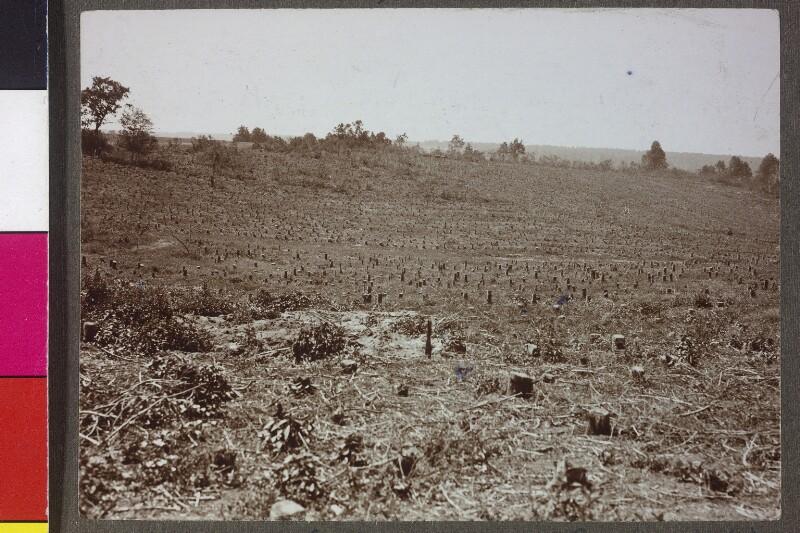 Abgeholzter Hochwald in Galizien