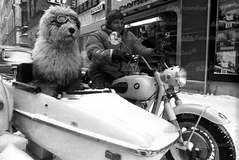Ein Hund als Beifahrer