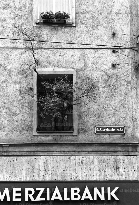 Baum der aus einem Fenster wächst