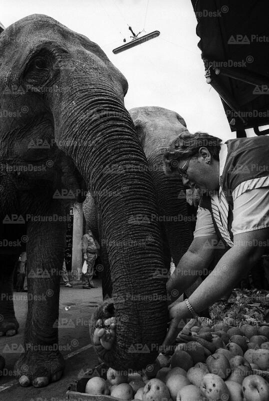 Elefanten am Wiener Naschmarkt