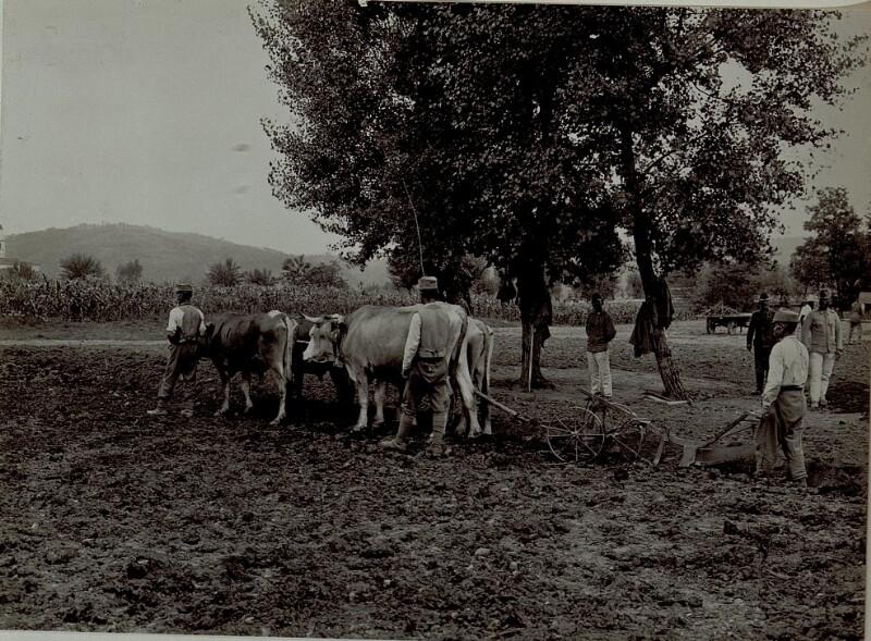 Ackerbau im Frontgebiet