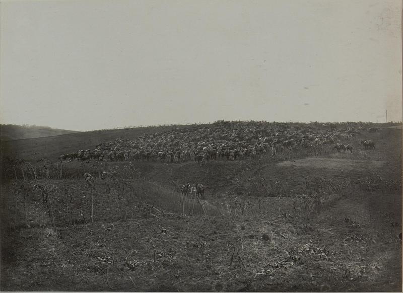 Abgesessene Kavallerie bei Toury. (5.Landwehr-Kavallerie-Division.)