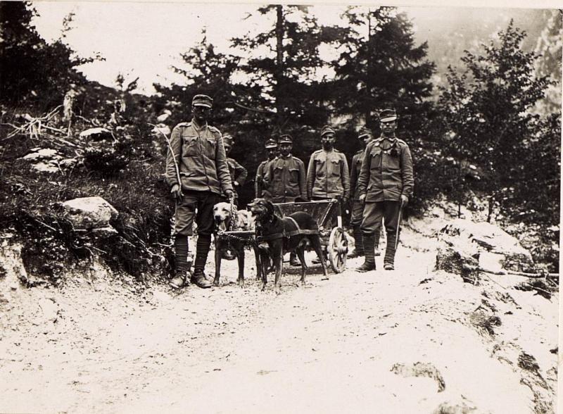 Hundegespann für den Verpflegs und Munitionsnachschub.