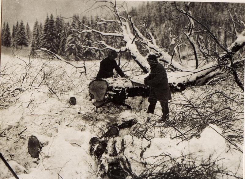 Russiscne Gefangene beim Holzfällen im Gailthale