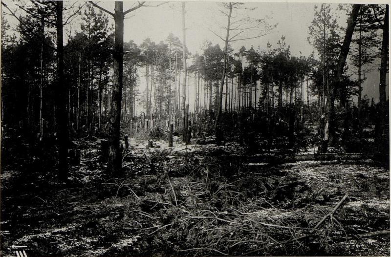 Abgestockter Wald mit einzeln stehenden Bäumen.Sicht auf das Schlachtfeld westlich von Strzegowa.