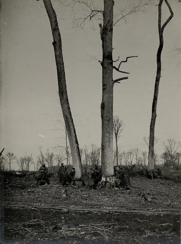 Entholzung eines den Besitz des Zaren bildenden Eichenwaldes durch russische Kriegsgefangene bei Bolgorodnica, 20.März.1916