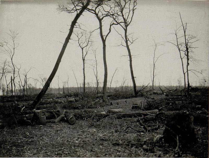 Entholzung eines den Besitz des Zaren bildenden Eichenwaldes durch russische Kriegsgefangene bei Bolgorodnica, 20.März1916