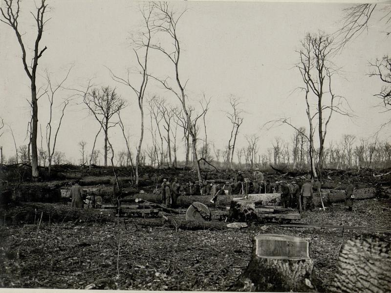 Beladung der Feldbahnwagen mit Eichenstämmen durch russische Kriegsgefangene am 20.März 1916