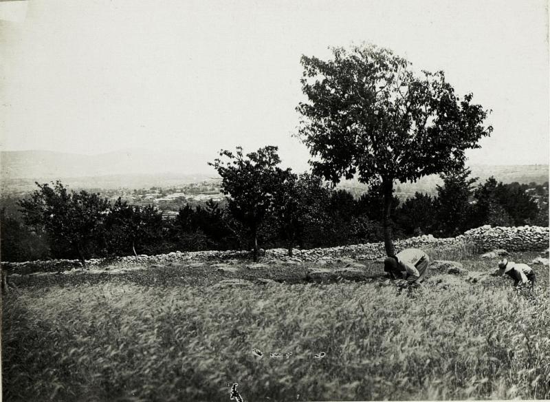 Erntearbeiten am Isonzo.